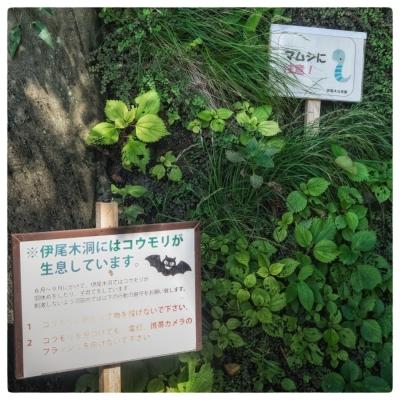 伊尾木 cave & valley