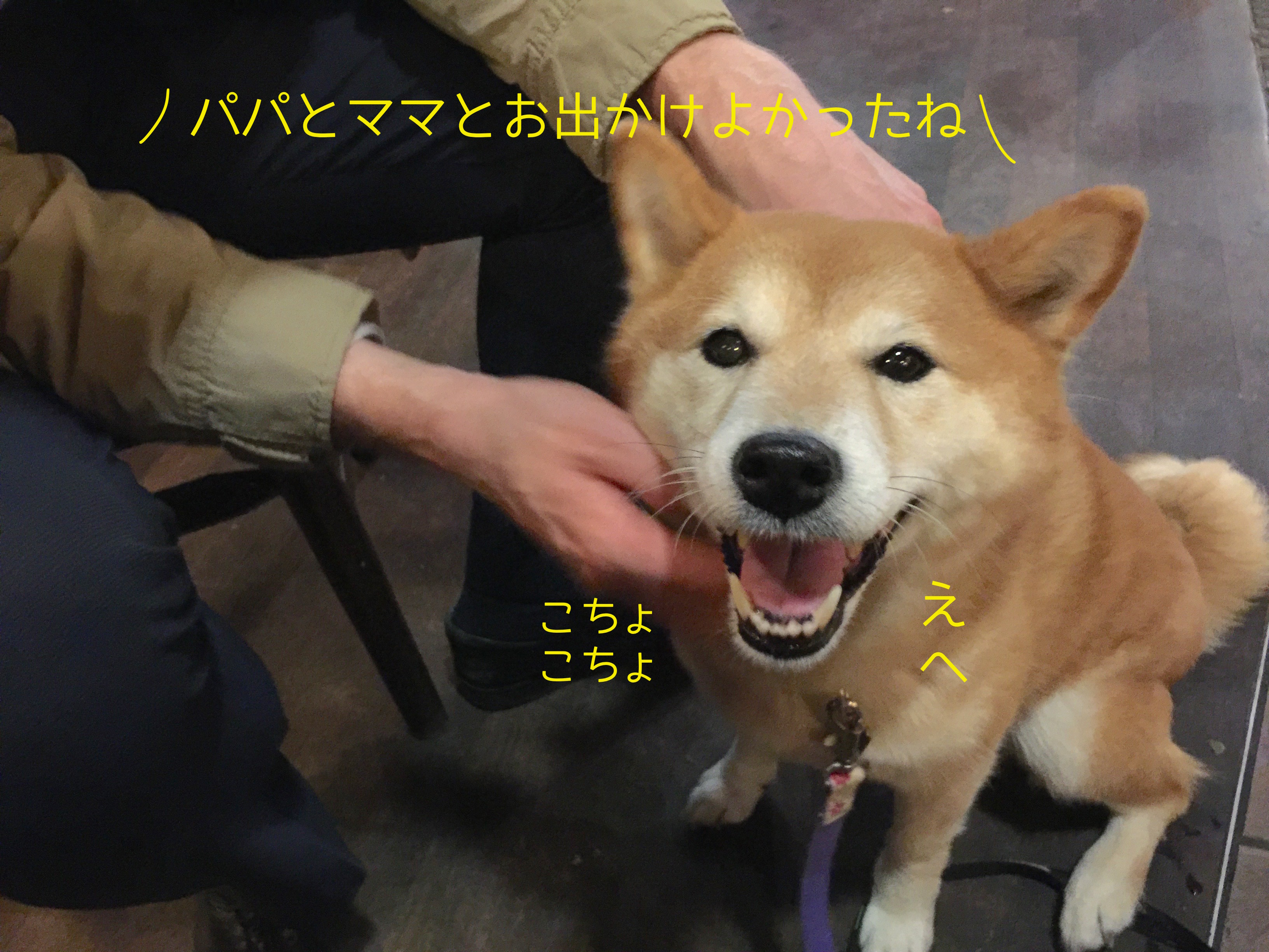 20161027195600acd.jpeg