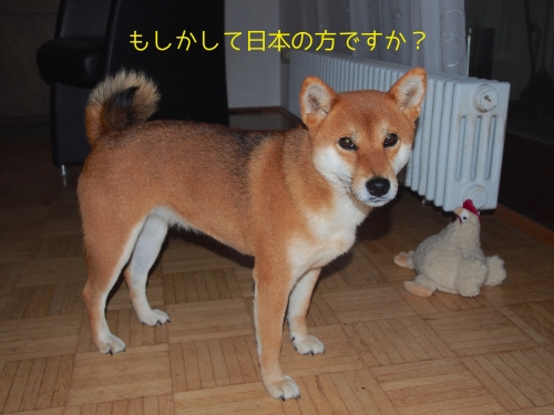 あなたもしかして日本人?