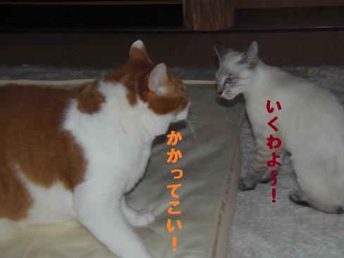 夜のお約束!!!4