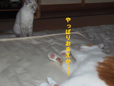 夜のお約束!!!3