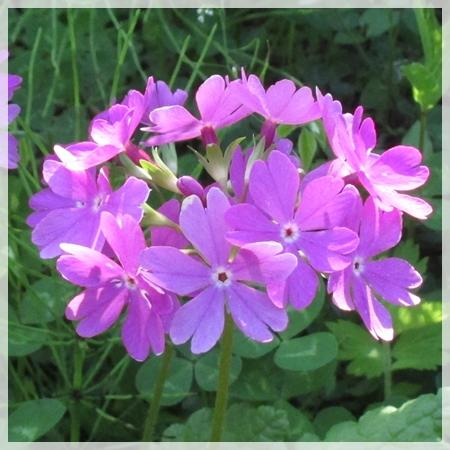 庭の花 6月2