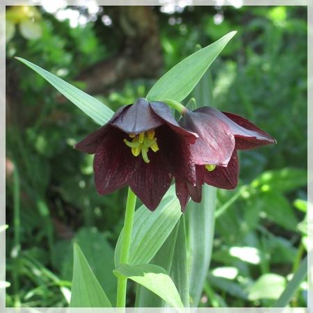 庭の花 6月5