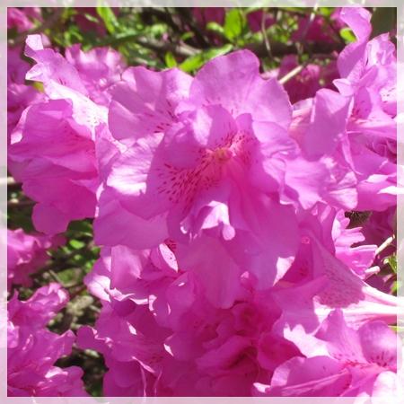 庭の花 6月6