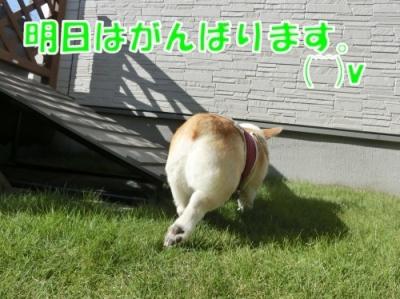 16115②
