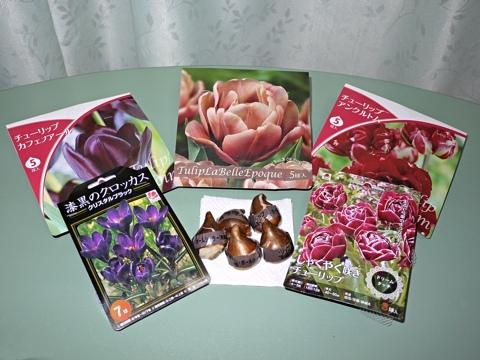 gardening255