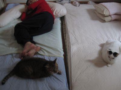 布団で寝てる