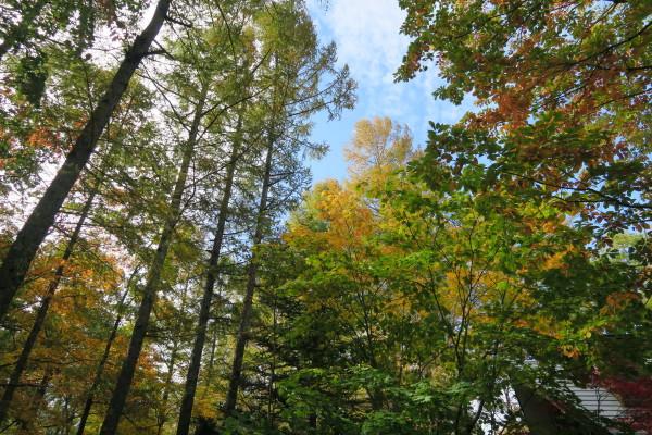 浅間高原の秋