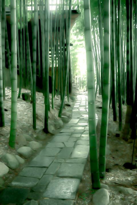 雨上がりの竹林