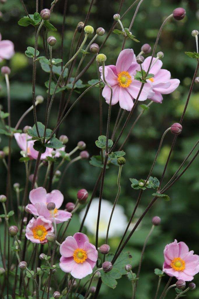 季節の花ほか_6