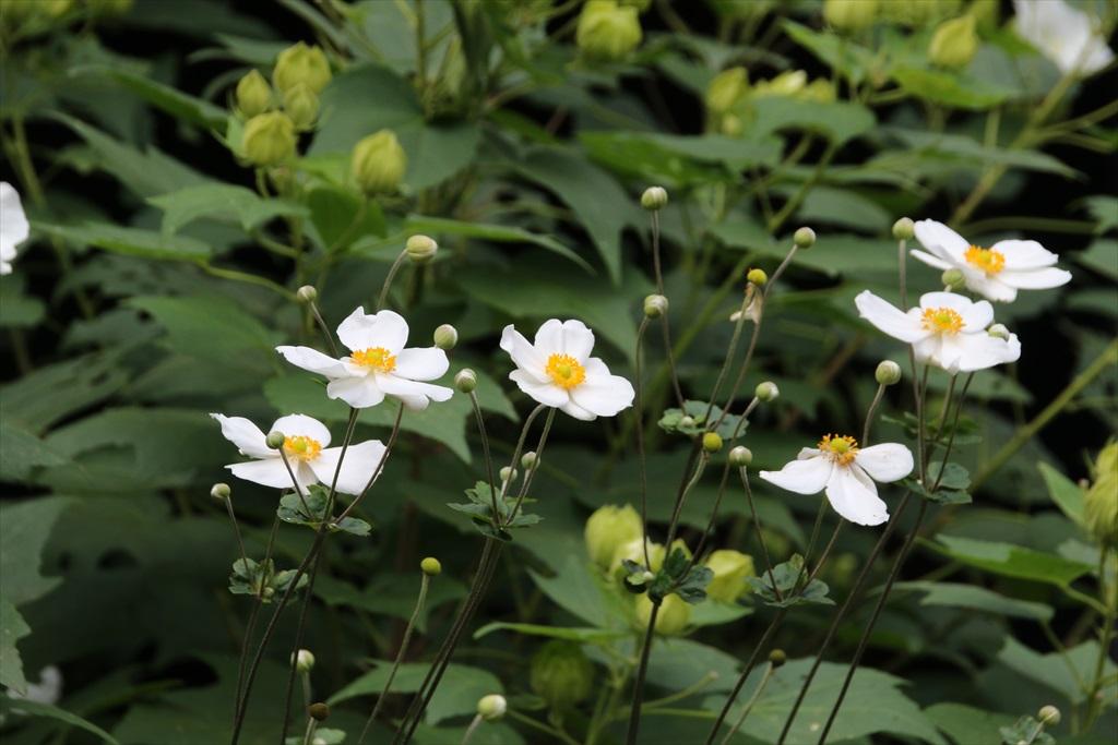 季節の花ほか_7