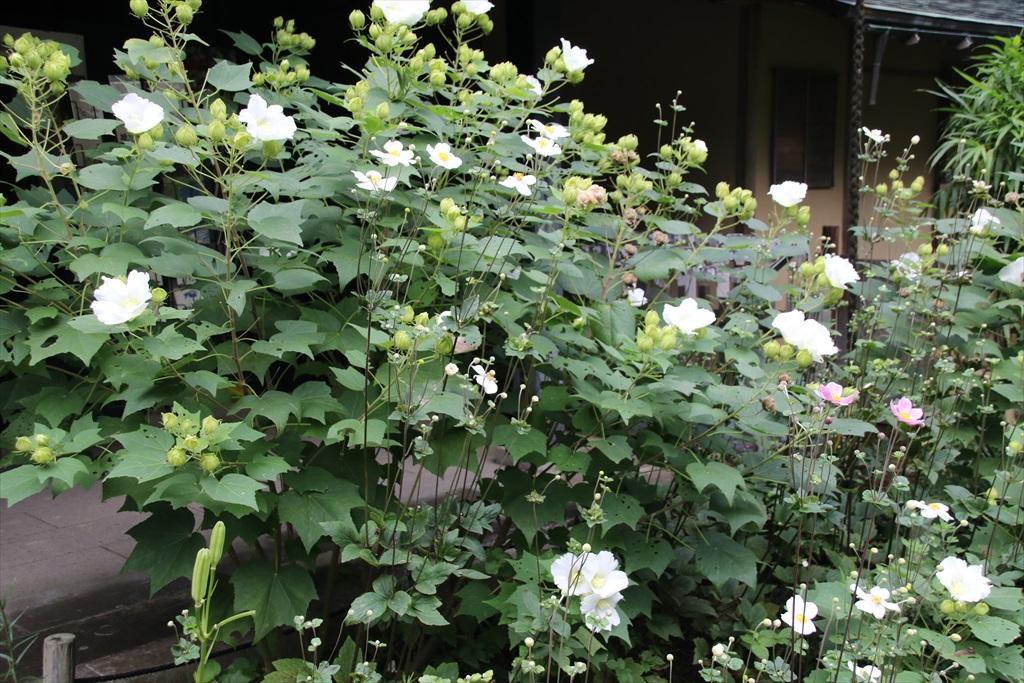 季節の花ほか_10