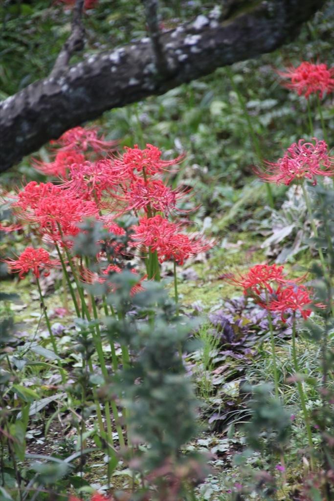 季節の花ほか_12