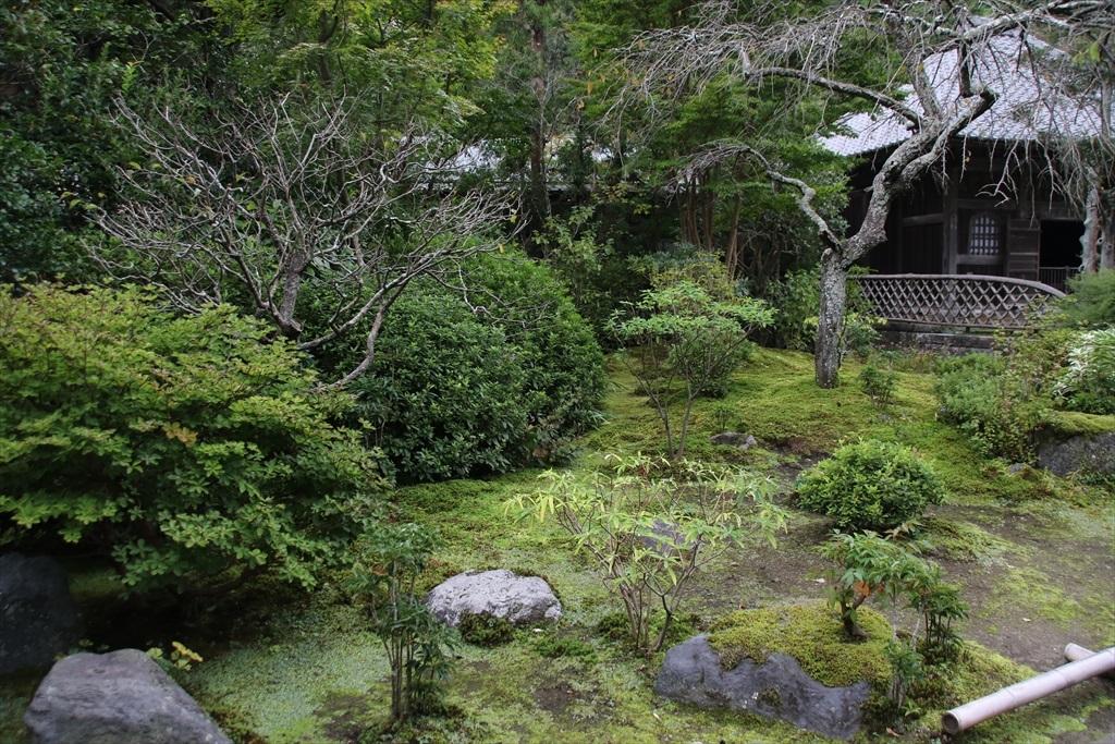 美しい庭と草花_1