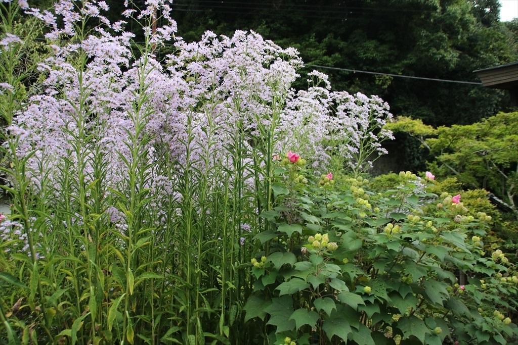 美しい庭と草花_2