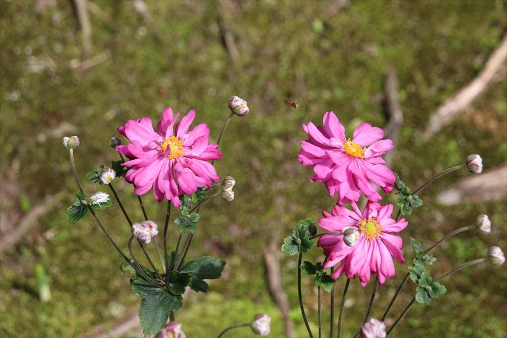 美しい庭と草花_4