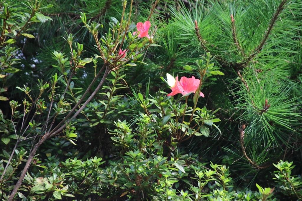 綺麗な花さんだ_1
