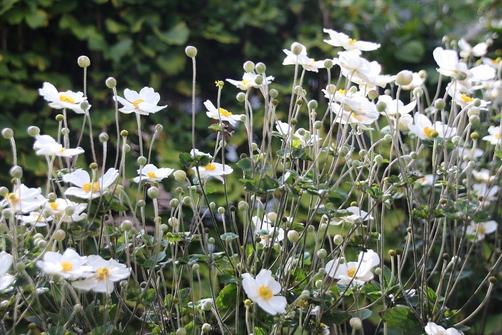 綺麗な花さんだ_2