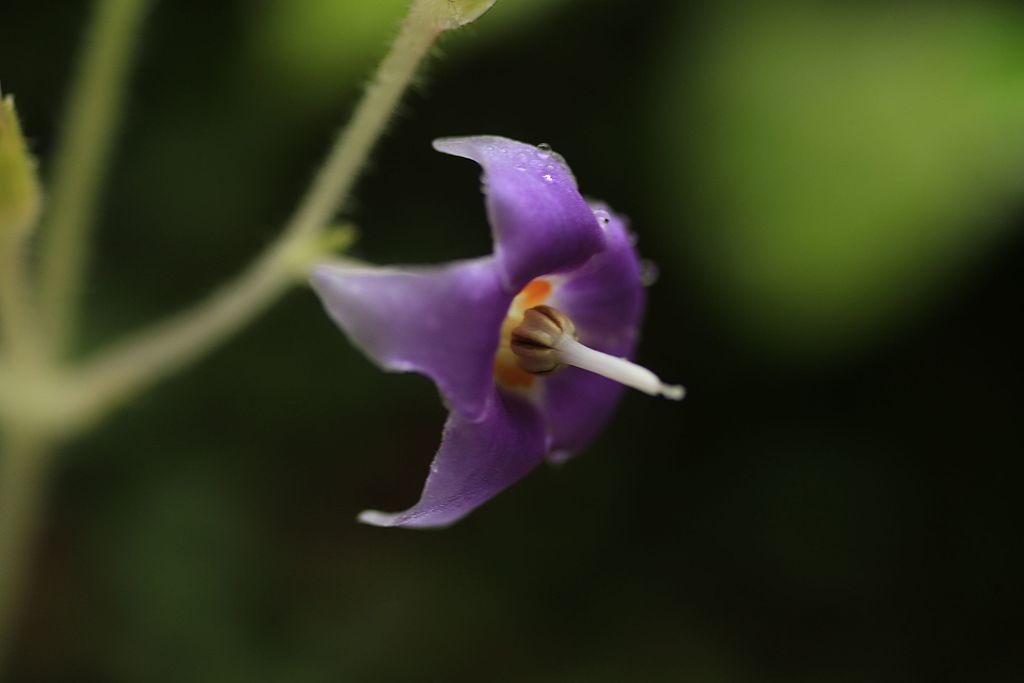 季節の花ほか_16