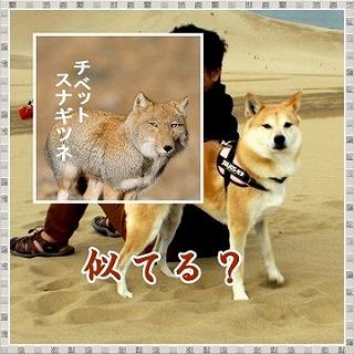 s-sakyus-13sakyu161-0613-cats