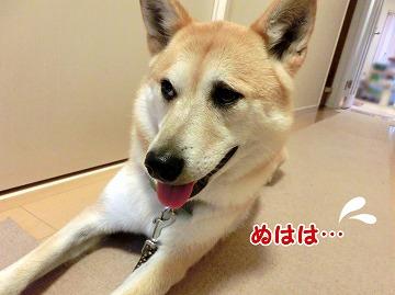 s-tokimeki160702-CIMG4570