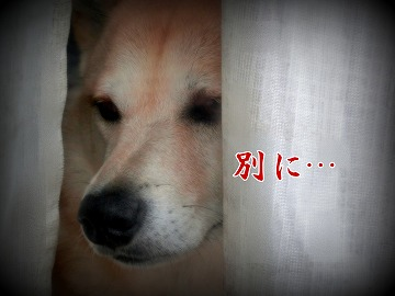 s-tokimeki160702-1-CIMG4517