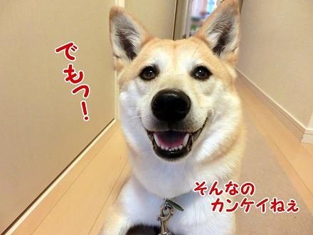 s-tokimeki160703-CIMG4566