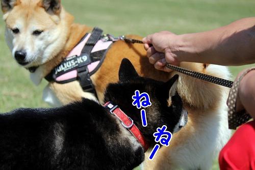 s-dogrun160716-IMG_1834