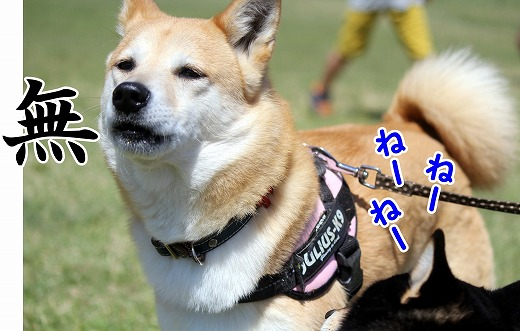 s-dogrun160716-1-IMG_1835