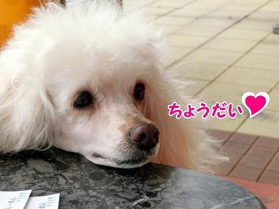 s-oyabe1160919-CIMG4205