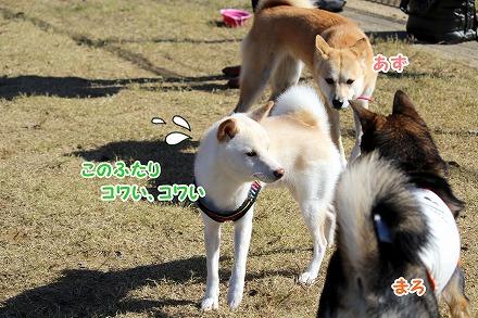 s-2oyabe160925ーIMG_4717