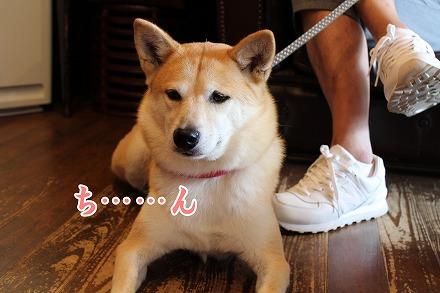 s-dogcafe161002-IMG_3722