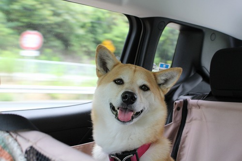 s-dogcafeIMG_3656.jpg