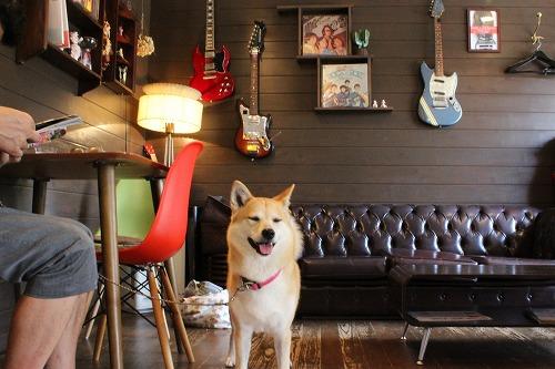 s-dogcafeIMG_3690.jpg