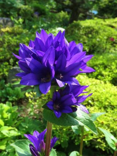 20160519_okutama_40.jpg