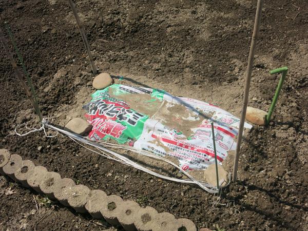 家庭菜園 大根貯蔵