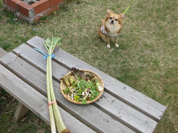 山菜 茶太郎