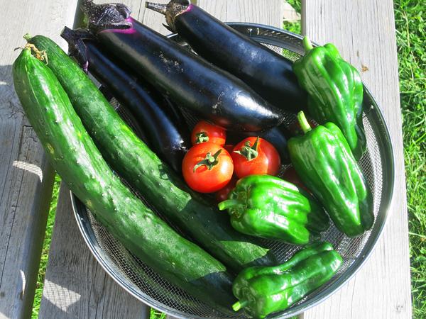 家庭菜園 トマト ナス キュウリ ピーマン