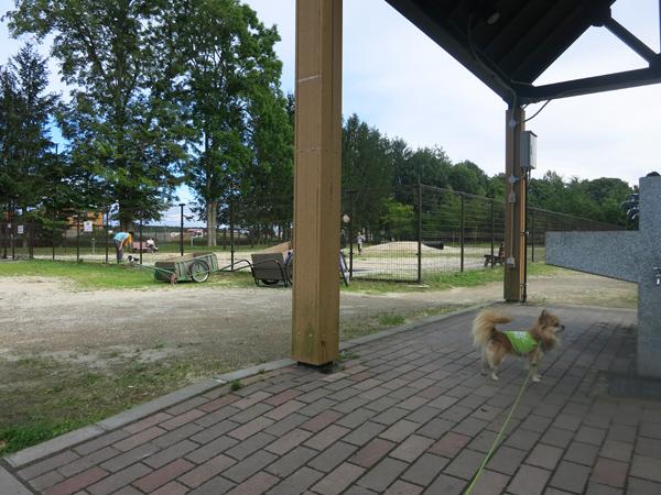 鹿公園キャンプ場 炊事場 ドッグラン