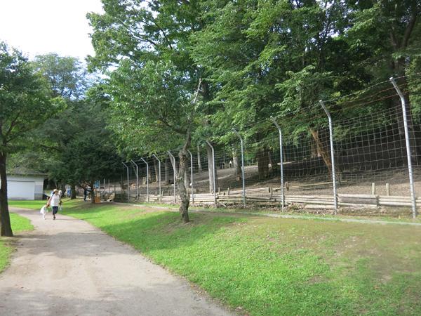 鹿公園 エゾシカの丘