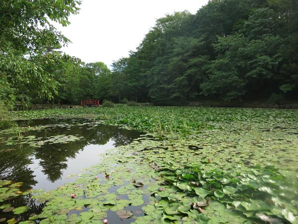 鹿公園 ホタル池