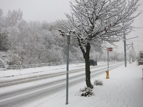 2016 初ドカ雪
