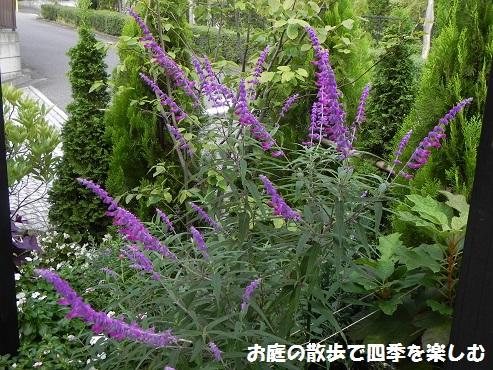 amejisutose-ji2_20161003112636e61.jpg