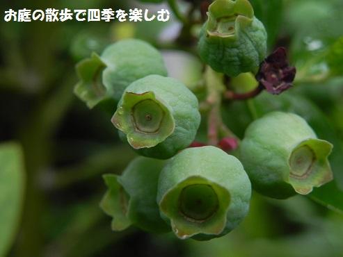 buru-beri-25_201606020914131a2.jpg