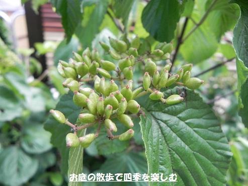 gamazumi24.jpg