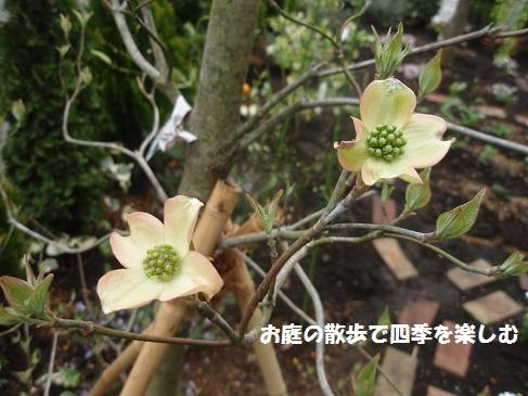 hanamizuki22_20160416070746624.jpg