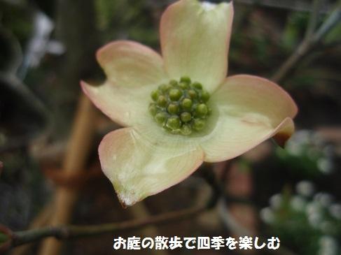 hanamizuki23_20160416070747031.jpg