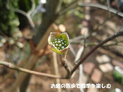 hanamizuki24_20160416070749311.jpg