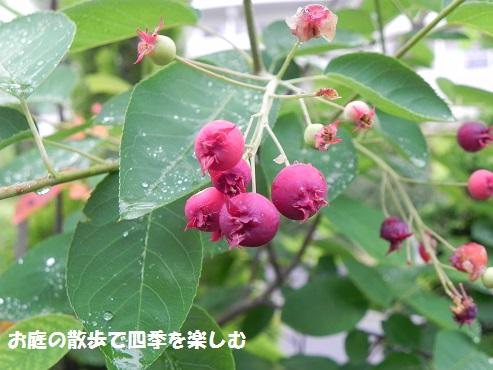 jyu-nberi-43.jpg