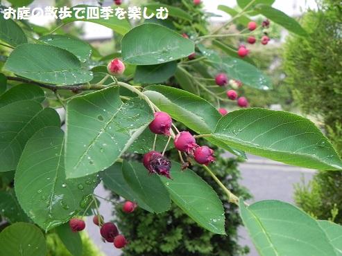 jyu-nberi-44.jpg